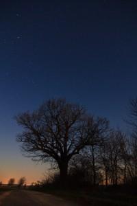 Die alte Eiche und Orion